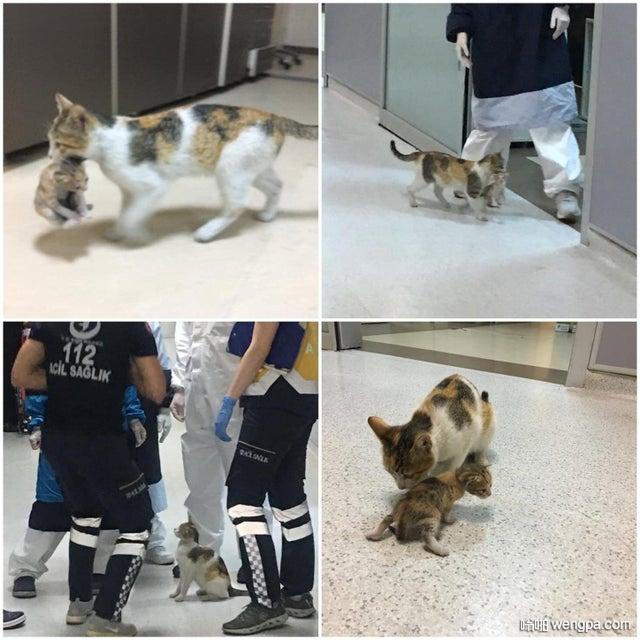伊斯坦布尔流浪猫去兽医诊所求助救治孩子