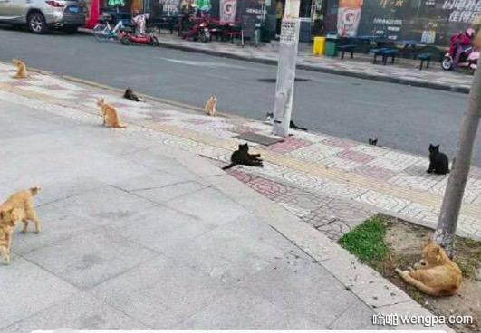 猫咪在疫情时期自觉保持安全距离