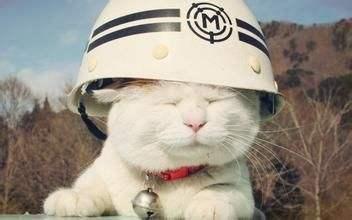 可爱小猫图片 猫咪戴头盔萌哒哒