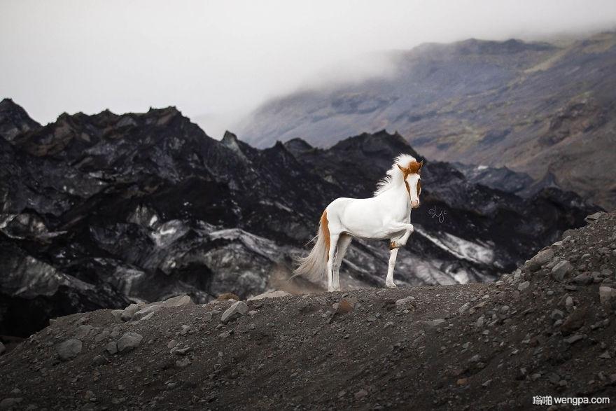 梦幻冰岛美景中的冰岛骏马(18p)