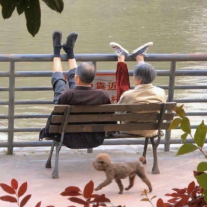 【理想老年生活】有狗有阳光 老伴健康而沙雕