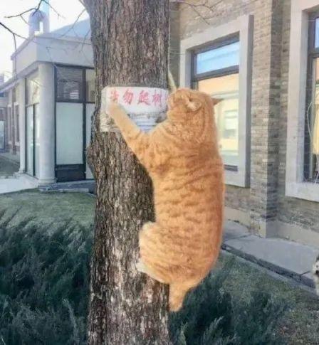 【搞笑图片】任性的橘猫 哈哈