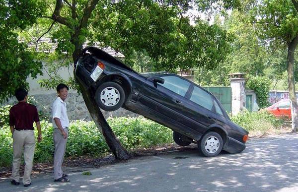 好牛的树啊!车停成这样真有水平