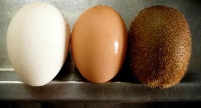 新发现,原来鸡蛋放久了真会出毛