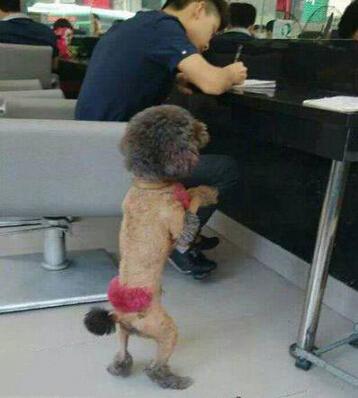 主人,求求你带我去做个美容护理
