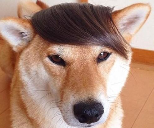 换了个发型,二汪看起来帅多了