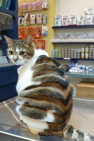 我的主人有点二猫咪恶搞图片赏析