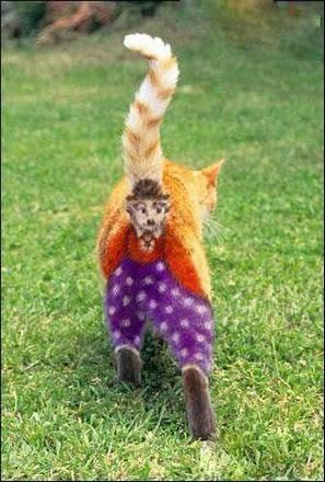 恶搞可爱猫咪二货爆笑动物图片
