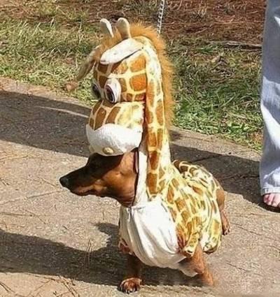 损友搞怪小动物狗变小短腿长颈鹿图片